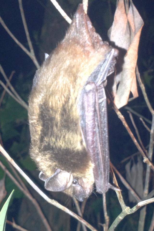 Bat removed from home and place in tree