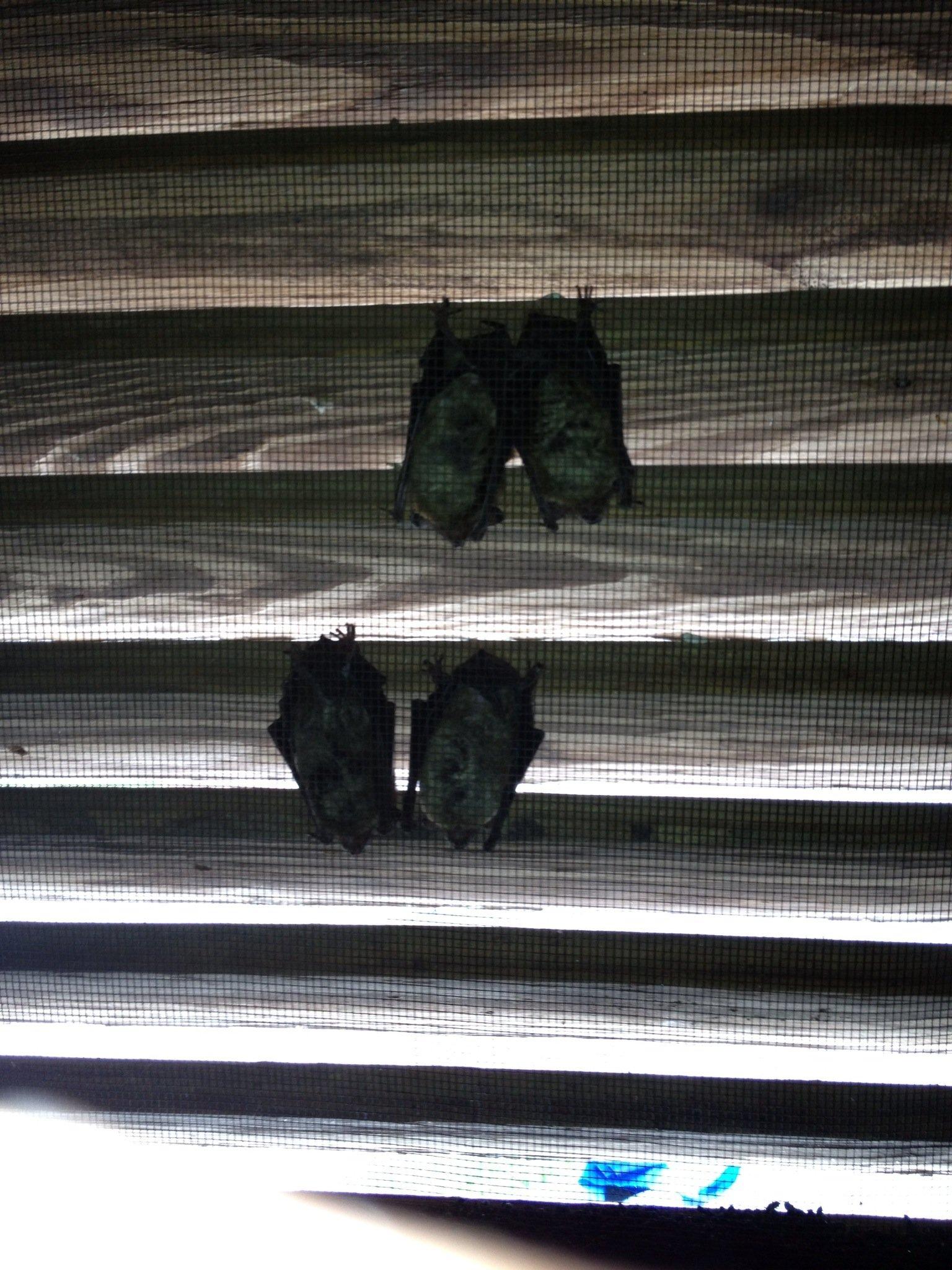 Johns Creek Bat Inspection
