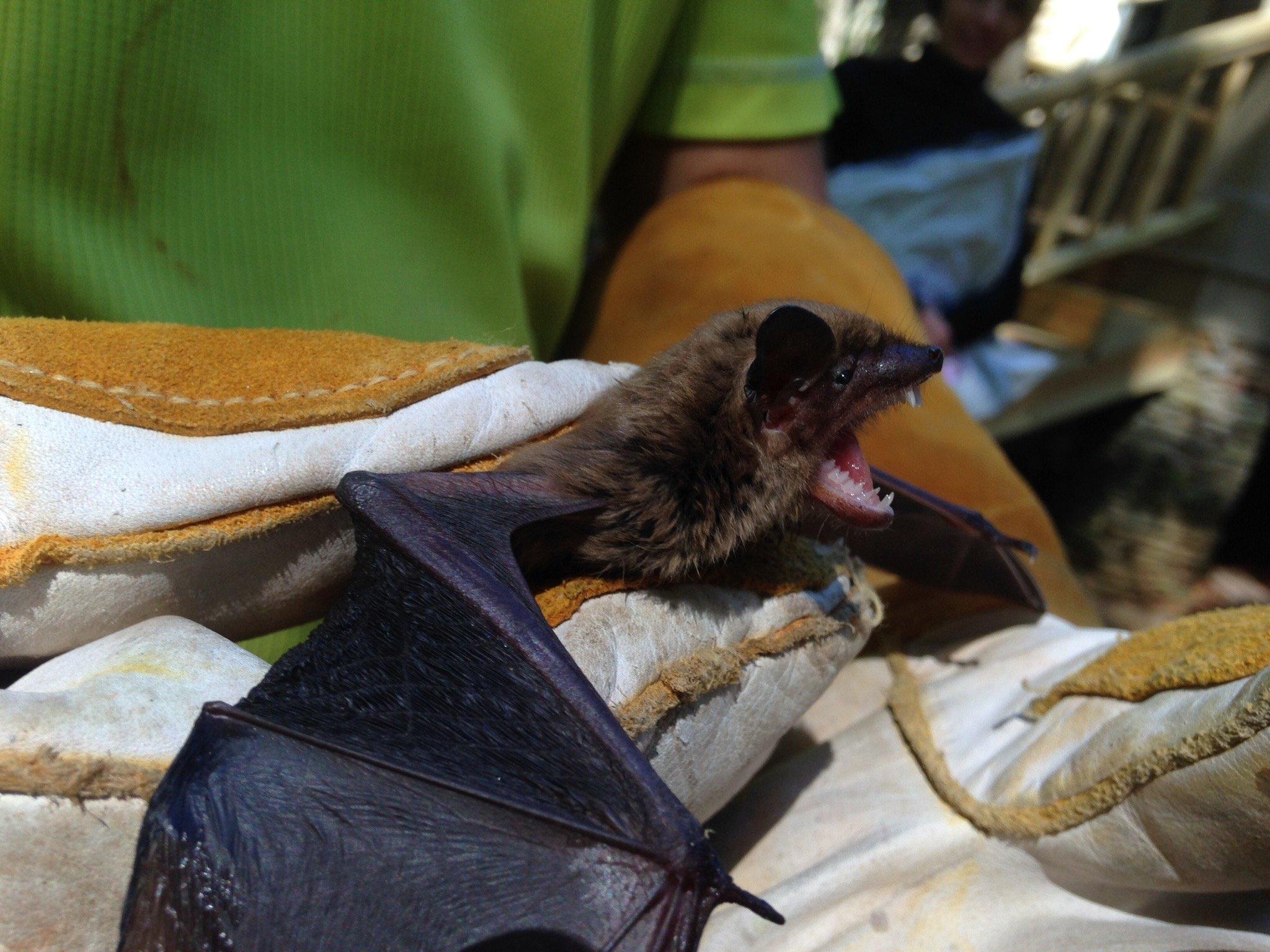 Ball Ground Bat Removal